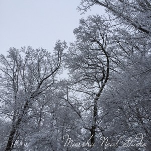 Snow covered trees outside the studio.